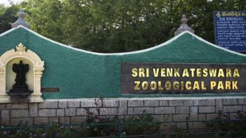 Sri Venkateswara National Park
